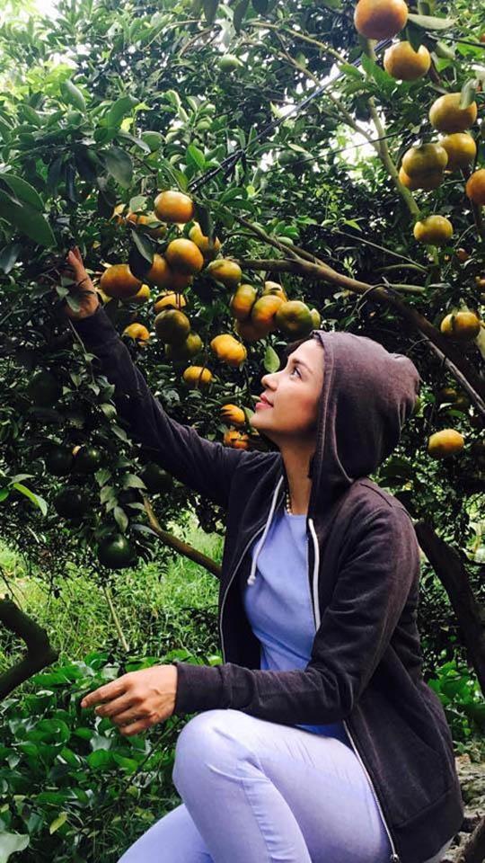 Cùng Việt Trinh đi thu hoạch nhiều loại trái cây trong vườn 2.500m2-7