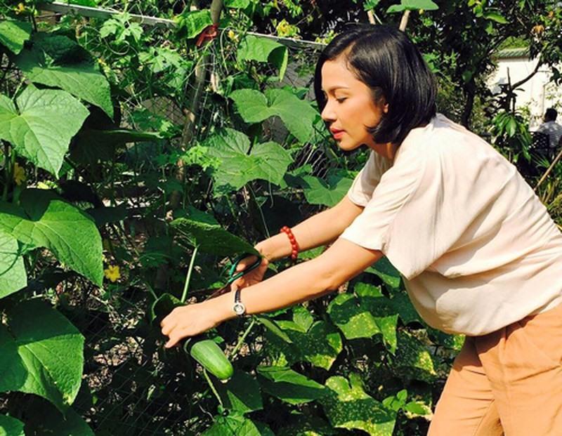 Cùng Việt Trinh đi thu hoạch nhiều loại trái cây trong vườn 2.500m2-10