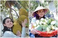 Cùng Việt Trinh đi thu hoạch nhiều loại trái cây trong vườn 2.500m2