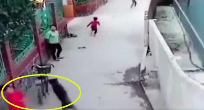Clip: Cùng nhóm bạn đứng trêu chọc, bé trai bị chó lao qua tường bao tấn công-1