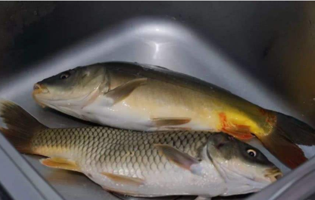 Ăn cá rất tốt cho sức khỏe nhưng có 4 kiểu loại thực phẩm này không nên ăn kẻo gây hại cho sức khỏe-2