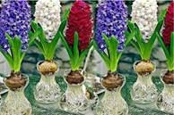 4 loại cây phong thủy trồng không cần nước, càng xanh tươi gia chủ càng giàu có, tiền tiêu không lo cạn