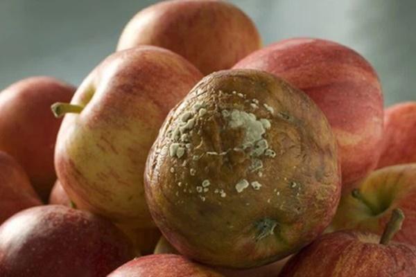 Những loại hoa quả được gọi là chất kích hoạt tế bào ung thư, rất nhiều gia đình đang ăn mỗi ngày mà không biết-3
