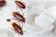 5 nguyên liệu bếp nhà nào cũng có giúp bạn đuổi gián hiệu quả lại tuyệt đối an toàn