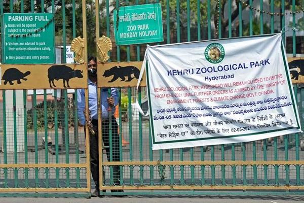 Tám con sư tử ở vườn thú Ấn Độ mắc Covid-19-1