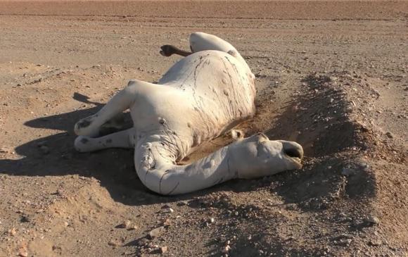 Tại sao phải cẩn thận với xác lạc đà trong sa mạc? Các nhà khoa học: nó tương đương với vũ khí sinh hóa-11