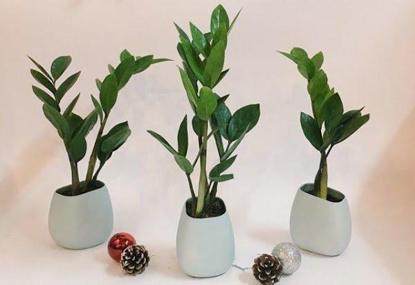 4 loại cây là con cưng của Thần Tài, vừa gọi tài lộc lại giúp gia chủ trong ấm ngoài êm-3