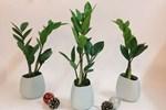 4 loại cây là con cưng của Thần Tài, vừa gọi tài lộc lại giúp gia chủ trong ấm ngoài êm