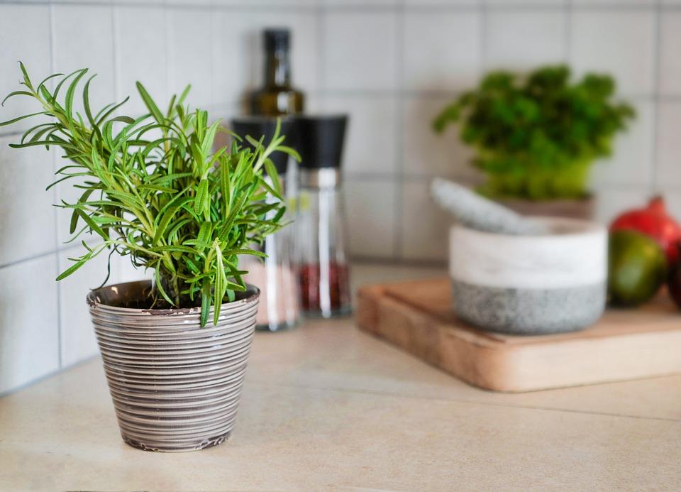 8 loại cây cảnh nên trồng trong nhà bếp vì có khả năng lọc không khí và khử mùi cực tốt-1