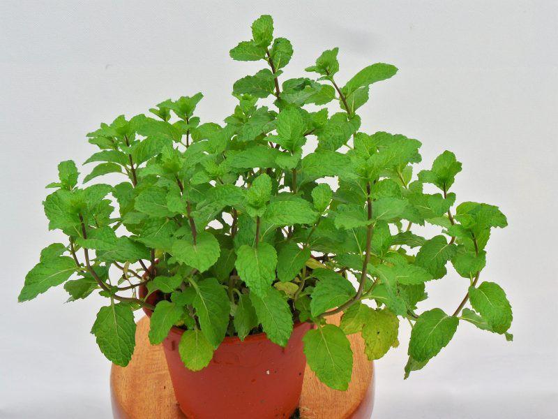 8 loại cây cảnh nên trồng trong nhà bếp vì có khả năng lọc không khí và khử mùi cực tốt-2