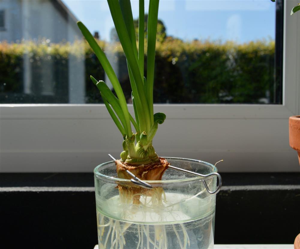 8 loại cây cảnh nên trồng trong nhà bếp vì có khả năng lọc không khí và khử mùi cực tốt-3