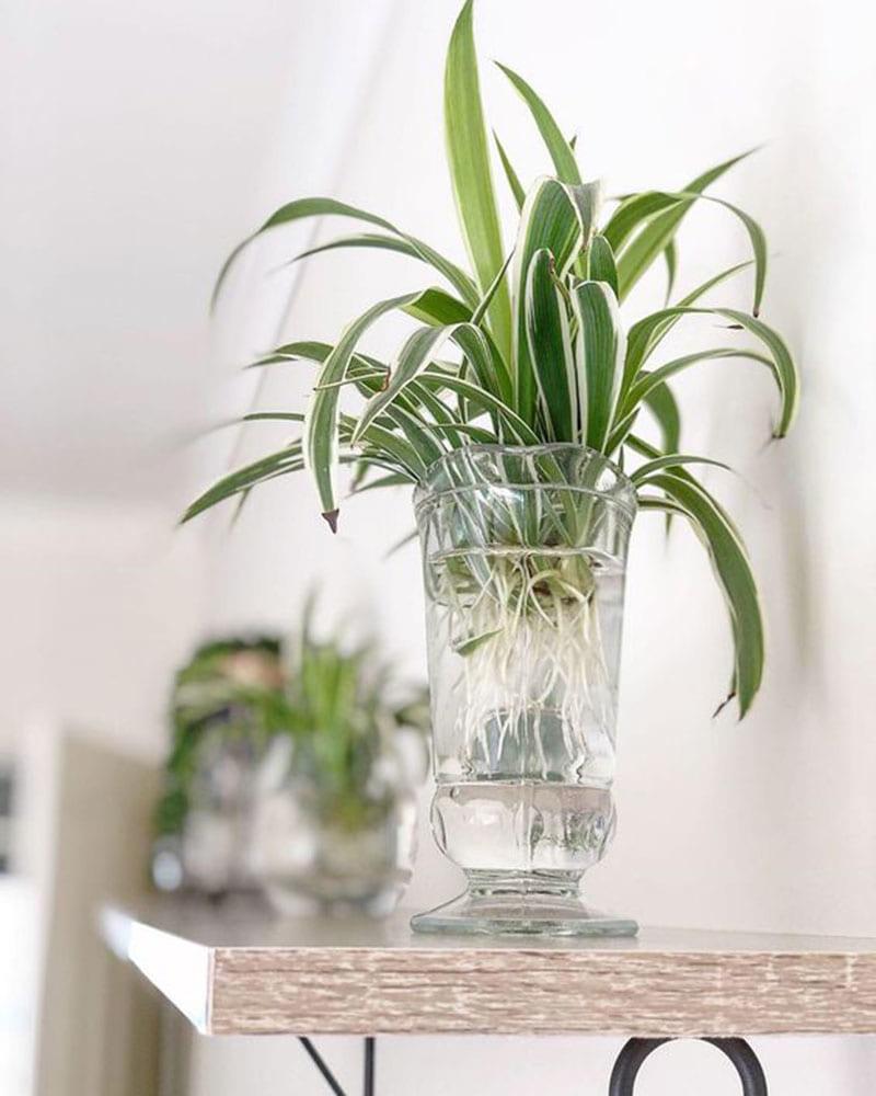 8 loại cây cảnh nên trồng trong nhà bếp vì có khả năng lọc không khí và khử mùi cực tốt-5