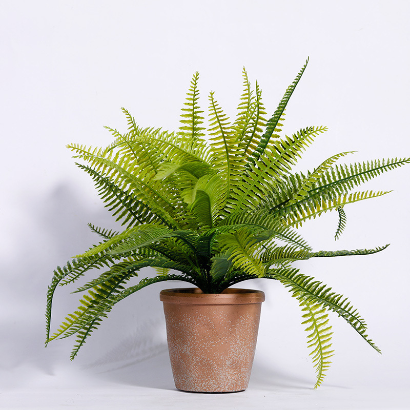 8 loại cây cảnh nên trồng trong nhà bếp vì có khả năng lọc không khí và khử mùi cực tốt-7