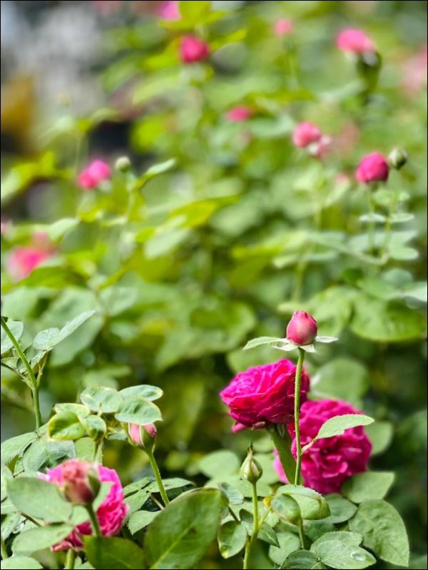 Biệt thự của Thân Thúy Hà có thêm góc chill ngập hoa tươi siêu lãng mạn, không gian sống xanh ai cũng mơ ước-6