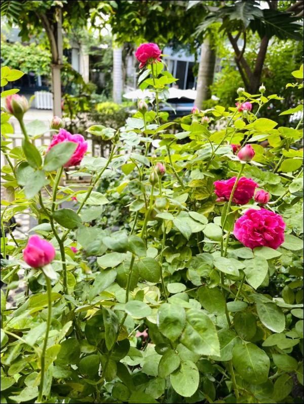 Biệt thự của Thân Thúy Hà có thêm góc chill ngập hoa tươi siêu lãng mạn, không gian sống xanh ai cũng mơ ước-7