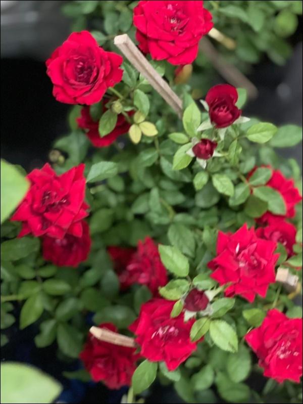 Biệt thự của Thân Thúy Hà có thêm góc chill ngập hoa tươi siêu lãng mạn, không gian sống xanh ai cũng mơ ước-8