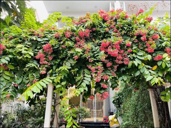 Biệt thự của Thân Thúy Hà có thêm góc chill ngập hoa tươi siêu lãng mạn, không gian sống xanh ai cũng mơ ước-5