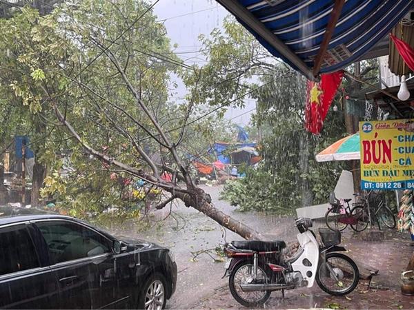Hà Nội: Hàng loạt cây xanh bật gốc đổ rạp xuống đường sau cơn mưa lớn đầu mùa-1