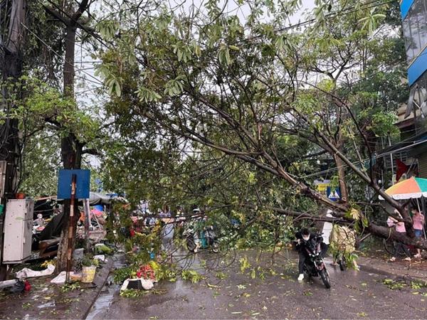Hà Nội: Hàng loạt cây xanh bật gốc đổ rạp xuống đường sau cơn mưa lớn đầu mùa-3
