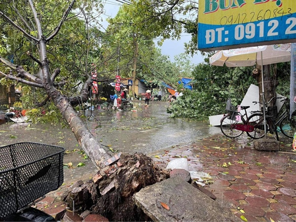 Hà Nội: Hàng loạt cây xanh bật gốc đổ rạp xuống đường sau cơn mưa lớn đầu mùa-4