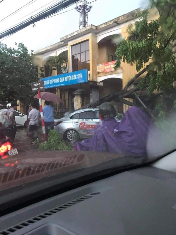 Hà Nội: Hàng loạt cây xanh bật gốc đổ rạp xuống đường sau cơn mưa lớn đầu mùa-5