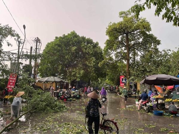 Hà Nội: Hàng loạt cây xanh bật gốc đổ rạp xuống đường sau cơn mưa lớn đầu mùa-6