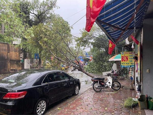 Hà Nội: Hàng loạt cây xanh bật gốc đổ rạp xuống đường sau cơn mưa lớn đầu mùa-7