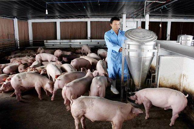 Vì sao thịt lợn rớt giá kỷ lục?-1