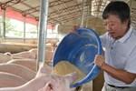 Giá lợn hơi bắt đáy của năm, nhiều hộ chăn nuôi treo chuồng-4