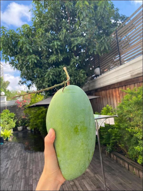 Biệt thự triệu đô của Tăng Thanh Hà và ông xã Louis Nguyễn vào hè cây trái sai trĩu quả, ai nhìn cũng thích mê-4