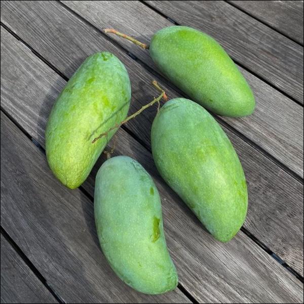 Biệt thự triệu đô của Tăng Thanh Hà và ông xã Louis Nguyễn vào hè cây trái sai trĩu quả, ai nhìn cũng thích mê-6