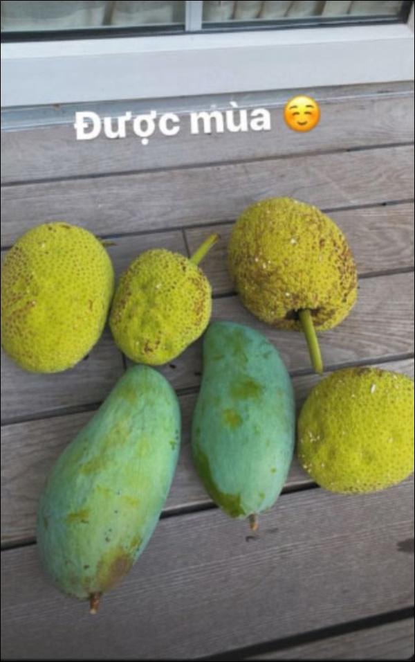 Biệt thự triệu đô của Tăng Thanh Hà và ông xã Louis Nguyễn vào hè cây trái sai trĩu quả, ai nhìn cũng thích mê-8