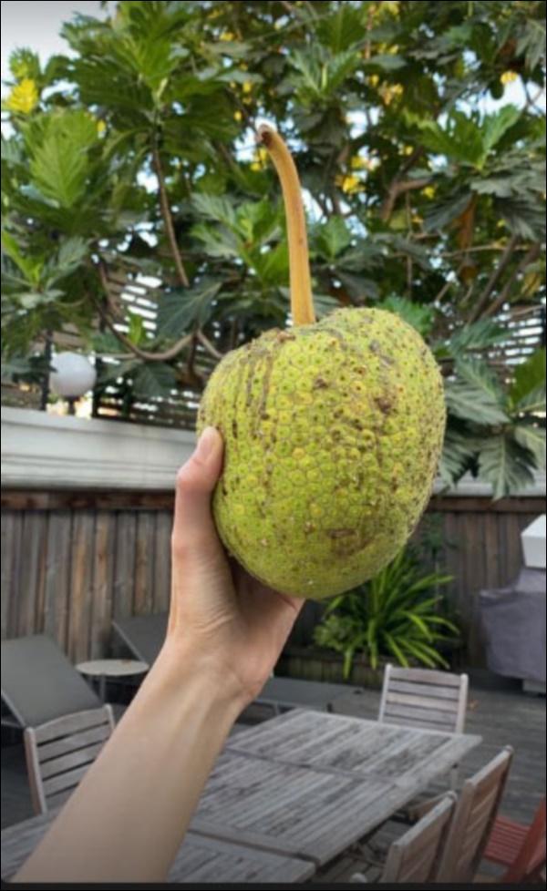 Biệt thự triệu đô của Tăng Thanh Hà và ông xã Louis Nguyễn vào hè cây trái sai trĩu quả, ai nhìn cũng thích mê-10