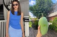 Biệt thự triệu đô của Tăng Thanh Hà và ông xã Louis Nguyễn vào hè cây trái sai trĩu quả, ai nhìn cũng thích mê