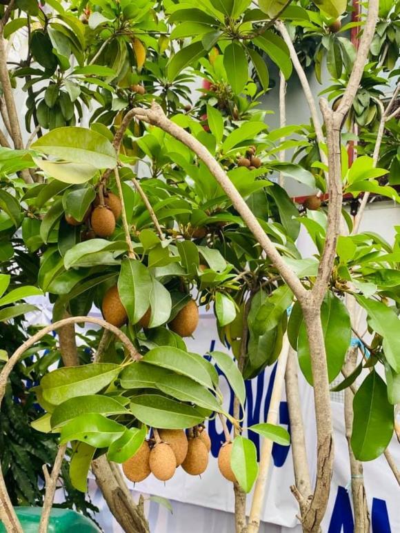 Vy Oanh khoe khu vườn ngập hoa thơm, cây ăn quả trĩu trái trong biệt thự rộng 1400m2-4