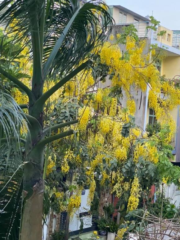 Vy Oanh khoe khu vườn ngập hoa thơm, cây ăn quả trĩu trái trong biệt thự rộng 1400m2-5