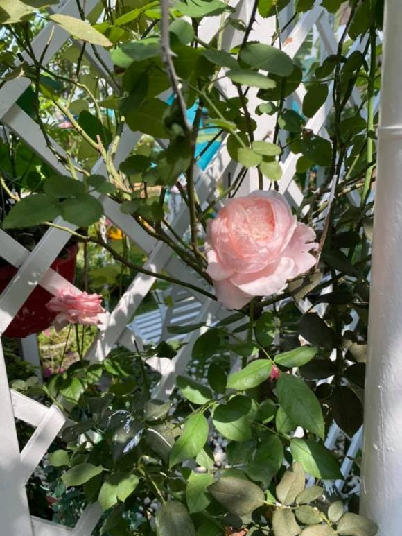 Vy Oanh khoe khu vườn ngập hoa thơm, cây ăn quả trĩu trái trong biệt thự rộng 1400m2-6