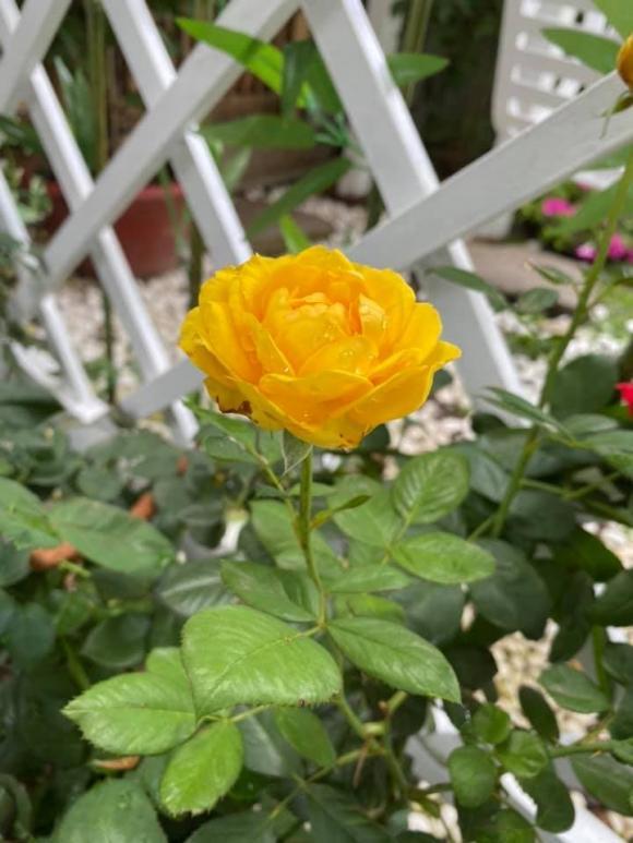 Vy Oanh khoe khu vườn ngập hoa thơm, cây ăn quả trĩu trái trong biệt thự rộng 1400m2-8