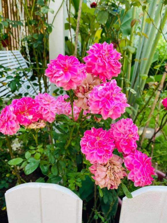 Vy Oanh khoe khu vườn ngập hoa thơm, cây ăn quả trĩu trái trong biệt thự rộng 1400m2-10