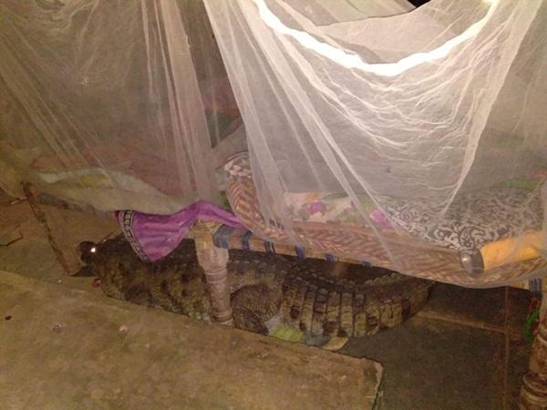 Bị tiếng chó sủa đánh thức, chàng trai nhìn xuống giường phát hiện Tử thần nằm ngay dưới sàn, gọi người ứng cứu mới biết con vật cần giúp đỡ-1