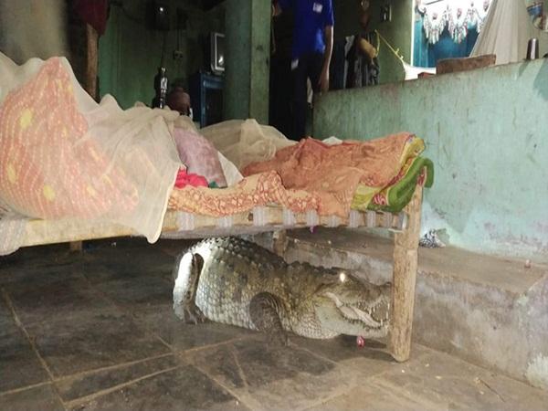 Bị tiếng chó sủa đánh thức, chàng trai nhìn xuống giường phát hiện Tử thần nằm ngay dưới sàn, gọi người ứng cứu mới biết con vật cần giúp đỡ-2