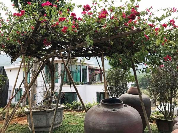 Cận cảnh khu vườn trong căn biệt phủ ngoại ô của hot mom Văn Thùy Dương, trồng được cả loại ớt đắt nhất thế giới có giá gần 1 tỷ đồng/kg-2