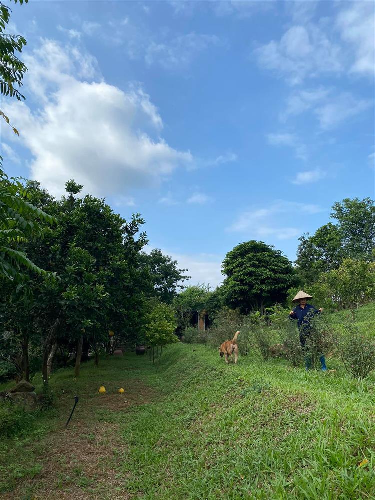 Cận cảnh khu vườn trong căn biệt phủ ngoại ô của hot mom Văn Thùy Dương, trồng được cả loại ớt đắt nhất thế giới có giá gần 1 tỷ đồng/kg-5