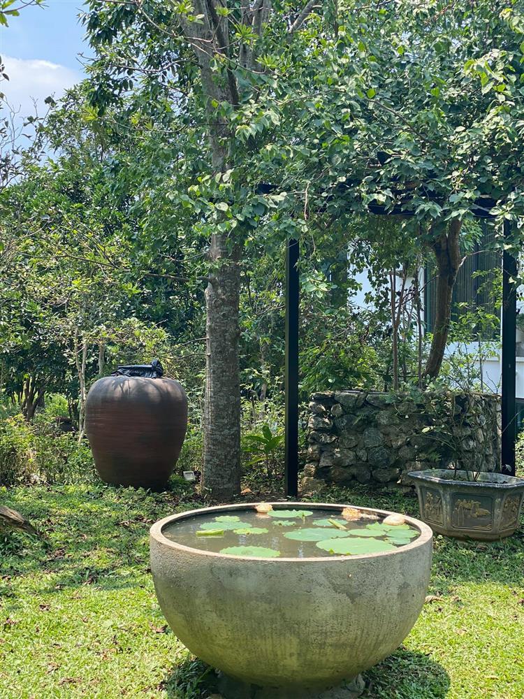 Cận cảnh khu vườn trong căn biệt phủ ngoại ô của hot mom Văn Thùy Dương, trồng được cả loại ớt đắt nhất thế giới có giá gần 1 tỷ đồng/kg-6