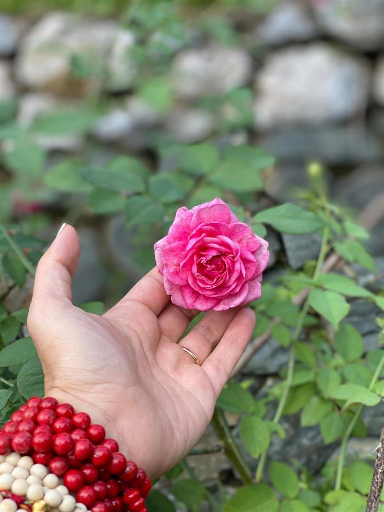 Cận cảnh khu vườn trong căn biệt phủ ngoại ô của hot mom Văn Thùy Dương, trồng được cả loại ớt đắt nhất thế giới có giá gần 1 tỷ đồng/kg-18