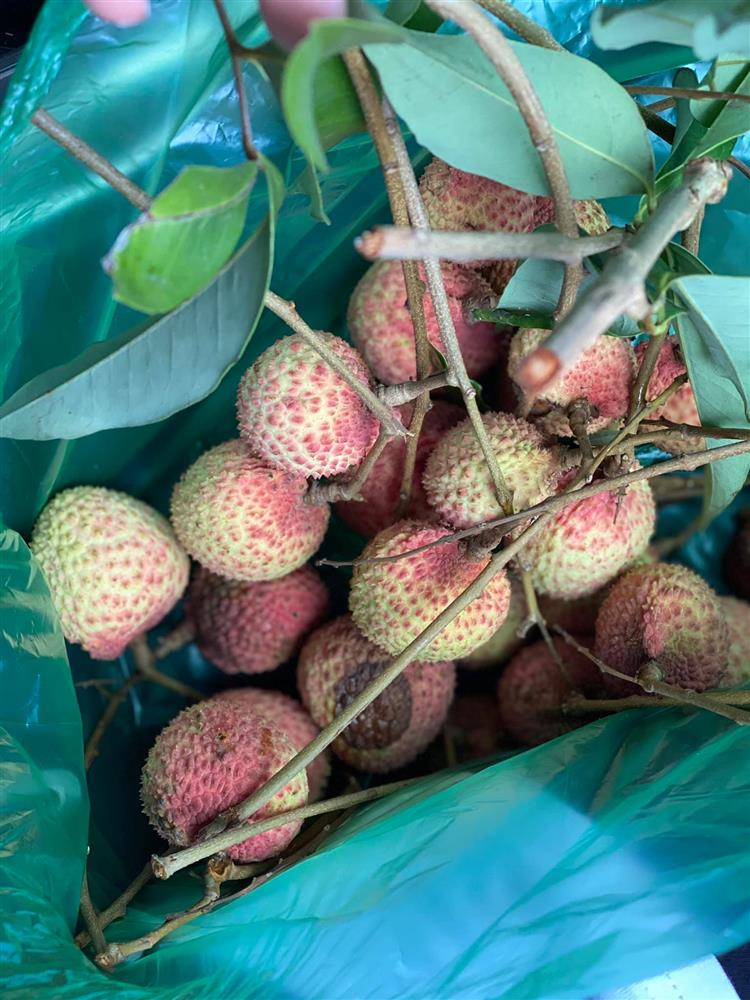 Cận cảnh khu vườn trong căn biệt phủ ngoại ô của hot mom Văn Thùy Dương, trồng được cả loại ớt đắt nhất thế giới có giá gần 1 tỷ đồng/kg-19