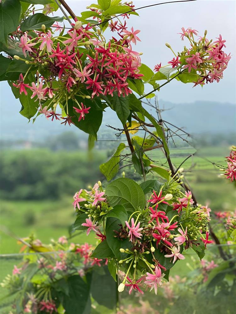 Cận cảnh khu vườn trong căn biệt phủ ngoại ô của hot mom Văn Thùy Dương, trồng được cả loại ớt đắt nhất thế giới có giá gần 1 tỷ đồng/kg-21