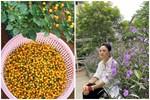 Cận cảnh khu vườn trong căn biệt phủ ngoại ô của hot mom Văn Thùy Dương, trồng được cả loại ớt đắt nhất thế giới có giá gần 1 tỷ đồng/kg
