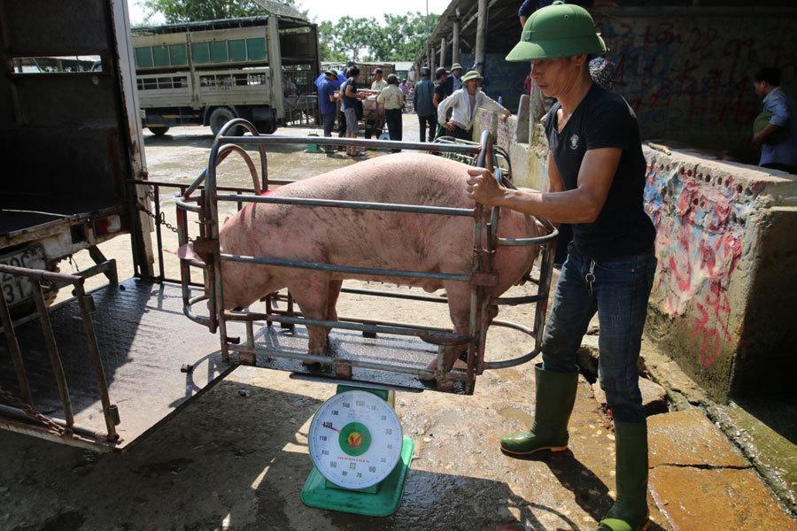 Giá lợn hơi bắt đáy của năm, nhiều hộ chăn nuôi treo chuồng-2