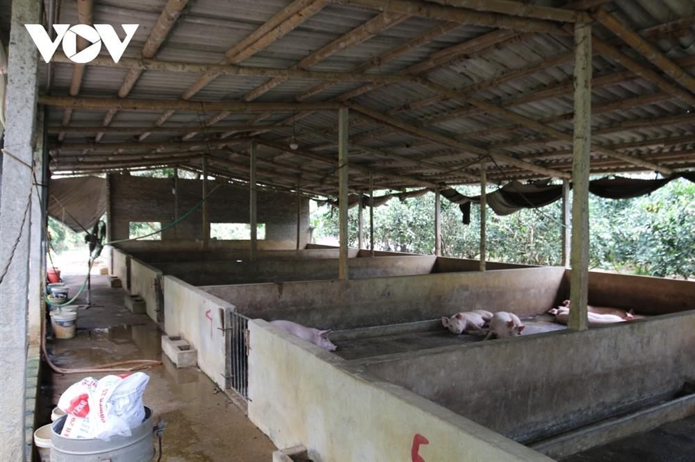 Giá lợn hơi bắt đáy của năm, nhiều hộ chăn nuôi treo chuồng-3